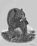 Alaska Digital Art - Alaska Black Bear 2 by Larry Linton
