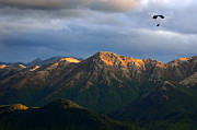 Ron Day - Alaska Paragliding
