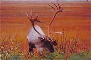 Rick  Monyahan - Alaskan Caribou