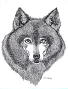 Husky Drawings Metal Prints - Alaskan Husky Metal Print by Nick Gustafson