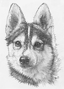 Designer Dogs - Alaskan Klee Kai by Barbara Keith