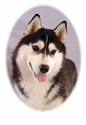 Alaskan Canvas Art Prints Framed Prints - Alaskan Malamute 2193 Framed Print by Larry Matthews