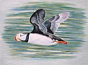 Puffin Paintings - Alaskan Puffin by Karen  Peterson