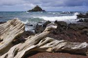 Overcast Day Posters - Alau Islet, Drift Wood Poster by Ron Dahlquist - Printscapes