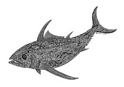 Scuba Drawings - Albacore by Carol Lynne
