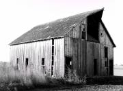 Shed Photo Prints - Albert City Barn 3 Print by Julie Hamilton