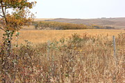 Barbed Wire Fences Prints - Alberta Prairie Farmland in Autumn Print by Jim Sauchyn