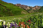 Western Usa Posters - Albion Basin Wildflowers Poster by Rob Daugherty - RobsWildlife.com
