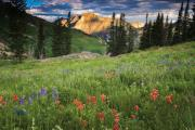 Albion Basin Wildflowers Print by Utah Images