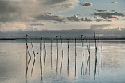 Flooded Framed Prints - Albufera gris. Valencia. Spain Framed Print by Juan Carlos Ferro Duque