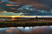 Flooded Photos - Albufera rice. Valencia. Spain by Juan Carlos Ferro Duque