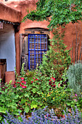Albuquerque Framed Prints - Albuquerque Garden Framed Print by David Patterson
