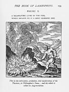 Fire Salamander Prints - Alchemy Print by Science, Industry & Businessnew York Public Library
