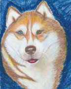Husky Drawings Prints - Alek the Siberian Husky Print by Ania M Milo