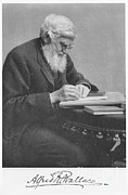 Alfred Photos - Alfred Russel Wallace by Science Source