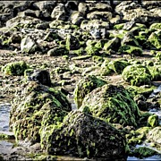 Algae Rocks Print by Arya Swadharma