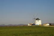 Algarve Windmill Print by Heiko Koehrer-Wagner