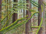 James Geddes - Alger Forest