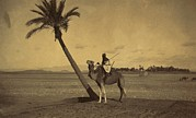 1880s Photos - Algerian Camel Rider Next To A Palm by Everett