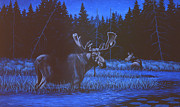 Bull Moose Prints - Algonquin Moonlight Print by Richard De Wolfe