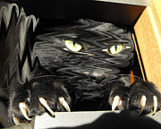 Black Cat Photos Photos - Alices cat by Rebecca Margraf