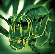 Locust Prints - Alien Print by DigiArt Diaries by Vicky Browning