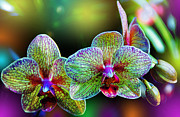 Glowing Prints - Alien Orchids Print by Bill Tiepelman