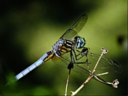 Dragonfly Photo Originals - Alienwear by Mark Williams