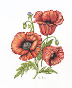 Red Poppies Drawings - All About Poppies by Karen Risbeck