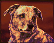 Dog Rescue Digital Art - All American Mutt 2 by Jane Schnetlage