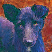 Puppy Digital Art Framed Prints - All American Mutt Framed Print by Jane Schnetlage