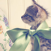Kitten Photos - All Dressed Up by Amy Tyler