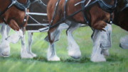 Clydesdale Posters - All Feet Poster by Anda Kett