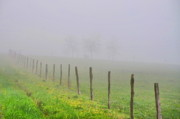 Fence Line Prints - All Fogged Up Print by Emily Stauring