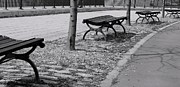 Park Benches Photos - All In A Row by Iris  Schechter