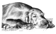 Sleeping Dog Drawings Prints - All My Dreams Print by Carole Raschella
