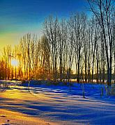 Winter Scenes Mixed Media Metal Prints - All that color Metal Print by Robert Pearson