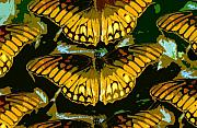 Butterflies Art Prints - All the butterflies Print by David Lee Thompson