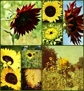 Yellow Sunflowers Prints - All the Sunflowers Print by Cathie Tyler
