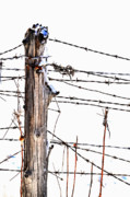 Barbed Wire Fences Posters - All Wired Poster by Emily Stauring