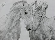 Wild Horse Drawings - All you need is love by Melita Safran