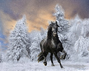 Snow Scenes Digital Art Metal Prints - Allegro Coming Home Metal Print by Tom Schmidt