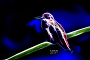 Rateitart Digital Art Prints - Allens Hummingbird - Fractal Print by James Ahn