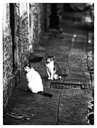 Cats Metal Prints - Alley Cats Metal Print by John Rizzuto