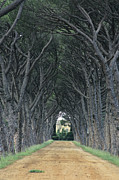 Plane Tree Photos - Alley . Provence by Bernard Jaubert
