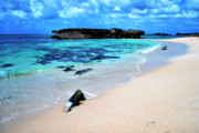 North Shore Prints - Alligator Rock North Shore Oahu Print by Thomas R Fletcher