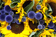 Vibrant Metal Prints - Allium and sunflowers Metal Print by Jane Rix