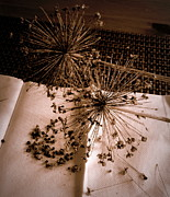 Brown Seeds Originals - Allium Seeds by Tanya  Searcy