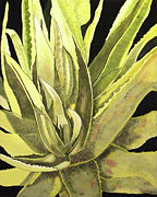 Watercolor Aloe Vera Prints - Aloe Vera Print by Donna Wiegand