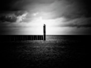 Seagull Mixed Media Metal Prints - Alone at Sea - Black and White Nature Photograph Metal Print by Artecco Fine Art Photography - Photograph by Nadja Drieling